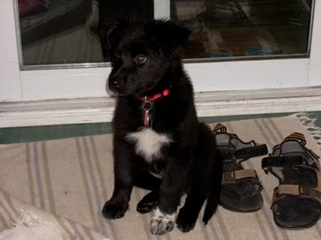 What she looked like as a puppy